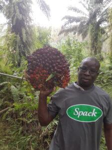 Organic Palm