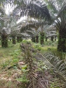 Palm Oil Demystified